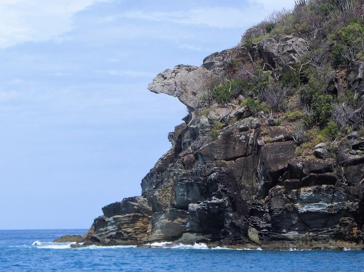 Iguana head at Guana Island