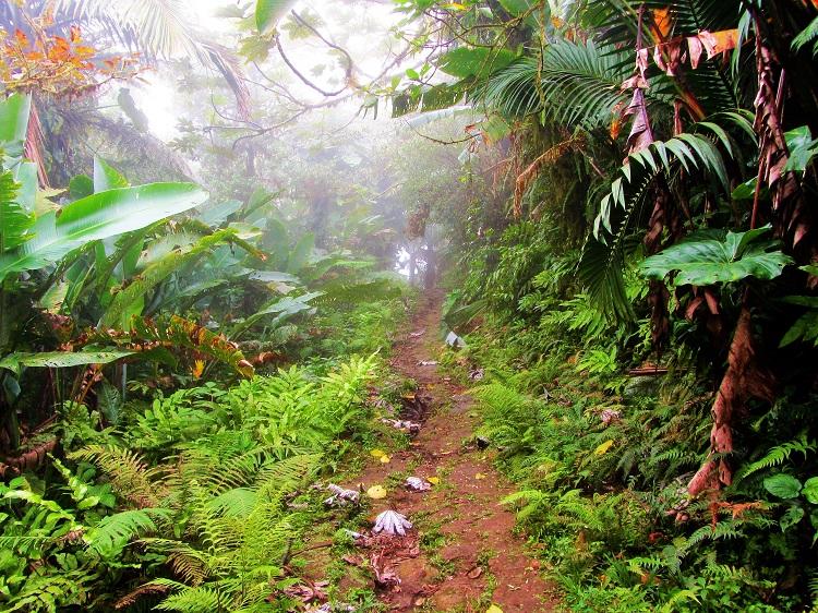 Mt Scenery on Saba