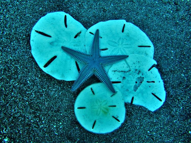 Statia - Sand dollars & starfish