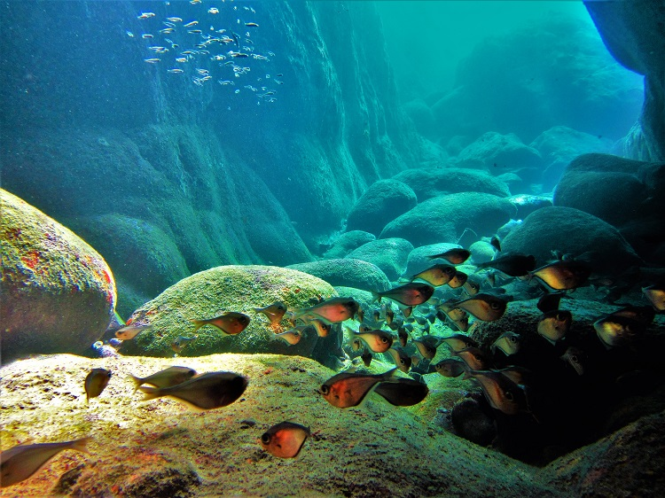Underwater - Lion's Den Floor