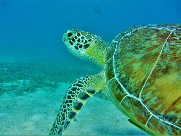 Underwater - Turtle Head