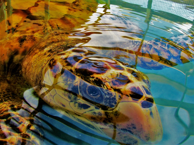 Turtle sanctuary up close