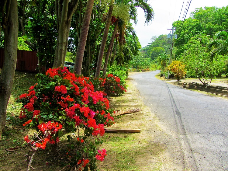POTD - Cruising - Grenada - Flowers Along Road