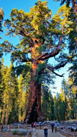 Yosemite - Mariposa Grove 2