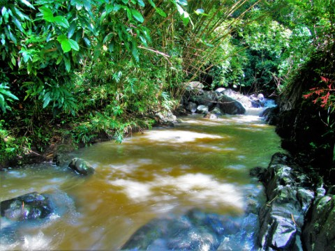 Grenada - Annandale Falls 3