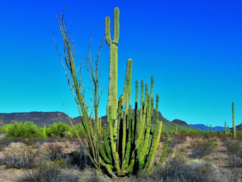 Organ Pipe Cactus National Monument 1
