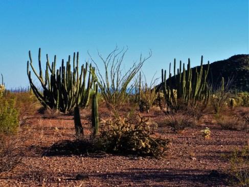 Organ Pipe Cactus National Monument 2
