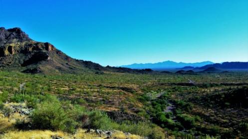 Organ Pipe Cactus National Monument 3
