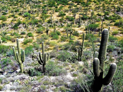 Saguaro National Park 3