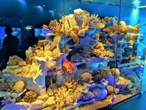 Museum of World Oceans 3