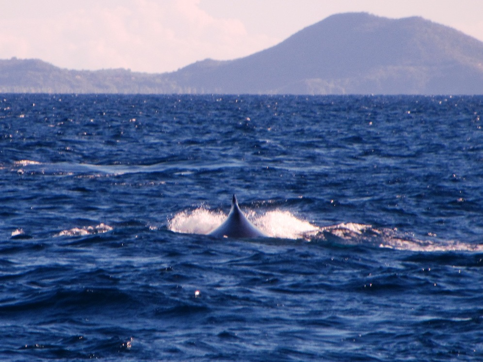 Whale following us