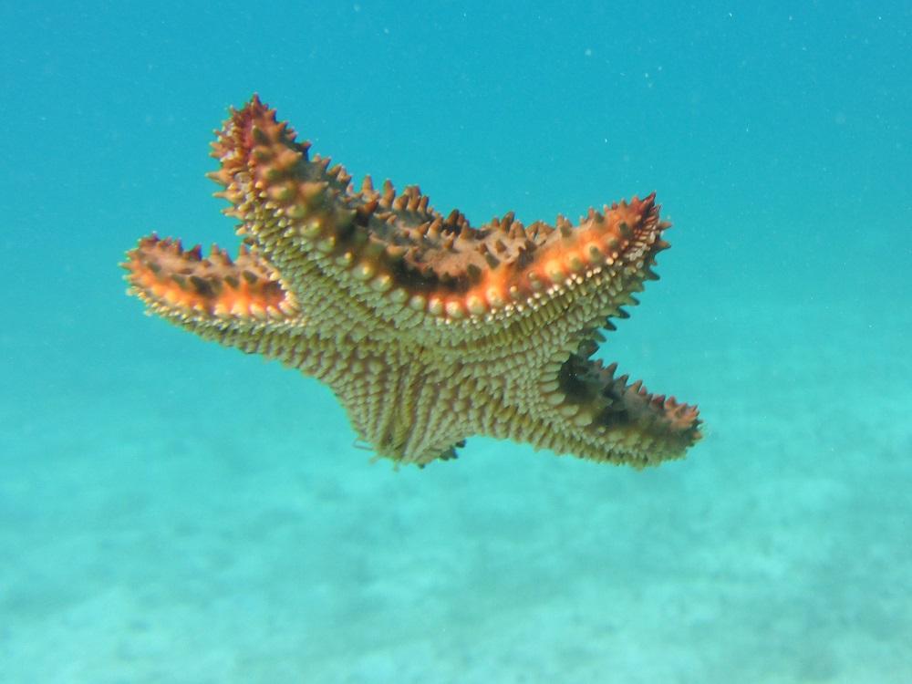 Starfish Falling