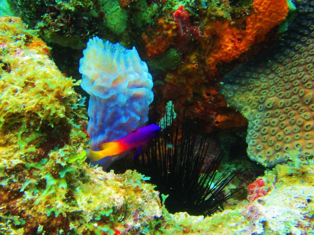 Light Blue Sponge