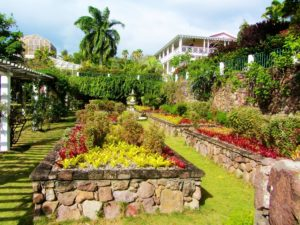 Botanical garden on Nevis