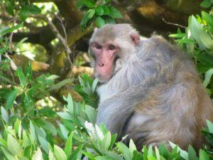 SVI - PR - Santiago -Monkey Closeup