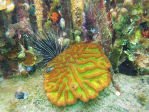 Otter Creek - Mangroves - Brain Coral