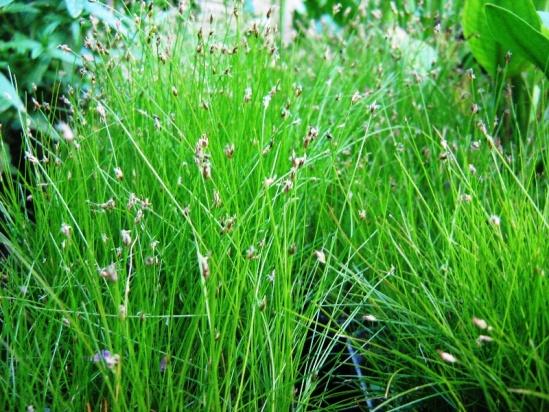 rastline-trave-025