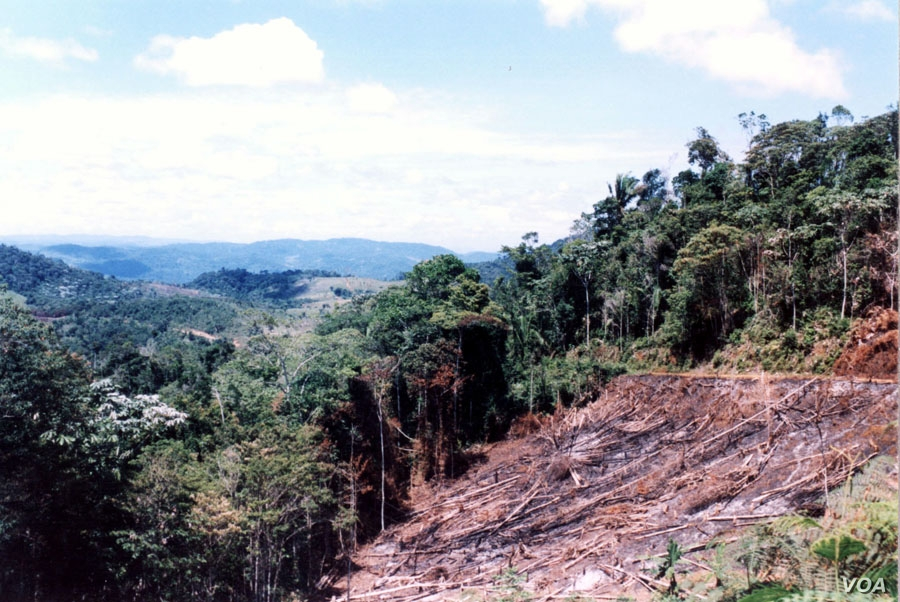 In the Atlantic Forest in Bahia, fire and deforestation of hill slopes are forbidden by Brazilian law, but law enforcement is ineffective.  (Credit: IESB archive)