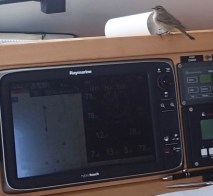 Bird #1 helping with navigation