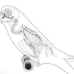 Duck Skeleton Diagram Wiring For Contactor Switch Theropod Thursday 5 Diversity Dinosaurpalaeo