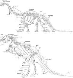 tiger tooth skull diagram [ 2897 x 3095 Pixel ]