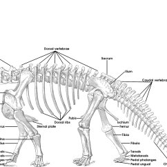 Cervical Vertebrae Diagram 2000 Harley Davidson Wiring Tutorial 15 The Bones Of Sauropod Skeleton Vertebra Picture Week