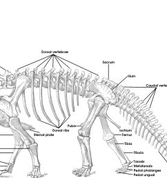 tutorial 15 the bones of the sauropod skeleton sauropod vertebra picture of the week [ 2897 x 1280 Pixel ]