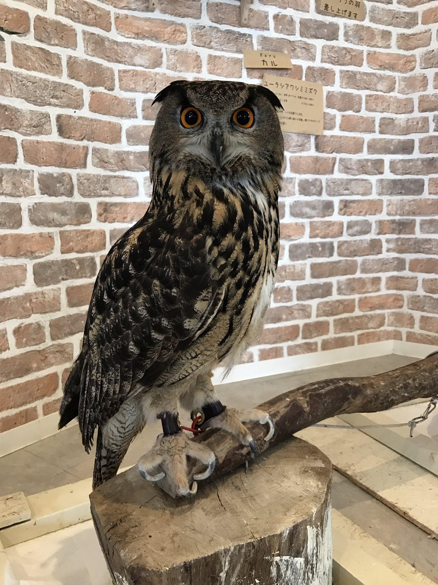 Owl Legs : Sauropod, Vertebra, Picture