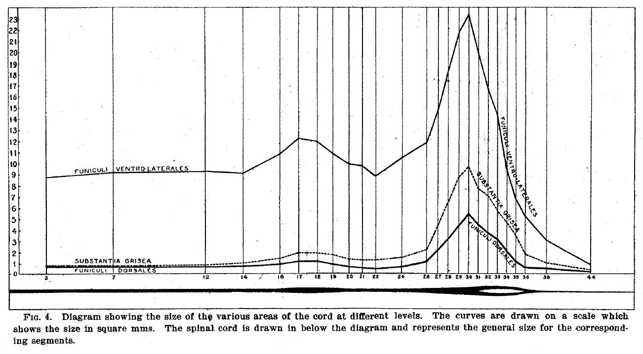 ostrich skeleton diagram trailer axle sauropod vertebra picture of the week streeter 1904 fig 4