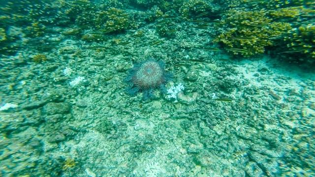 Crazy looking starfish