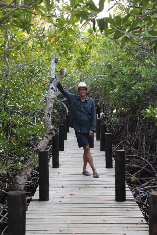 Mooi wandelpad in de mangrovem Tintipan