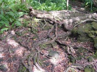 racines retenant le sol