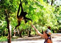 #Barillas_Jessie + monkey1