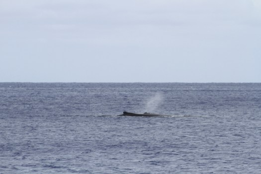 whale and calf in the anchorage
