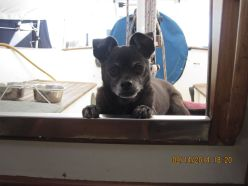 Our Harley was with us on the boat just a short time. He's romping through the fields of heaven now.
