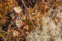 Eagle Cliff vegetation