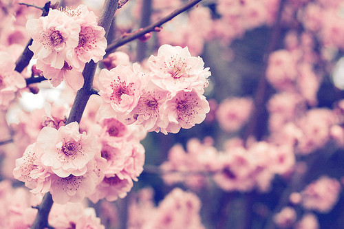 Cute Wallpapers For Springtime Picture Fransiscasteffi