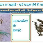 नागरमोथा / Nagarmotha – नागरमोथा के फायदे