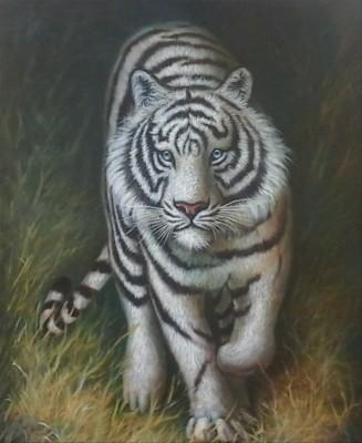 Gambar Harimau Hitam Putih Untuk Diwarnai