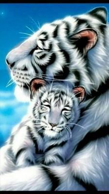 Gambar Harimau Putih : gambar, harimau, putih, Harimau, Duval, Tiger, 1024x768, Wallpaper, Teahub.io