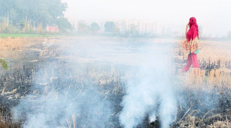 Image courtesy: http://blogs.timesofindia.indiatimes.com/Swaminomics/how-goats-can-clean-delhis-dirty-air/