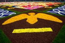 Flower-Carpet-2016_10