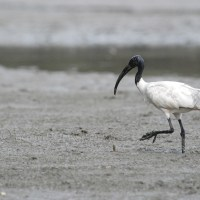 Kadalundi Bird Sanctuary : A gem yet to be polished