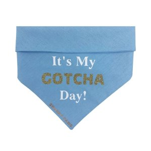 """""""It's My Gotcha Day!"""" Dog bandana for when you first bring the puppy home. Soft blue cotton with snaps at the back to fasten"""