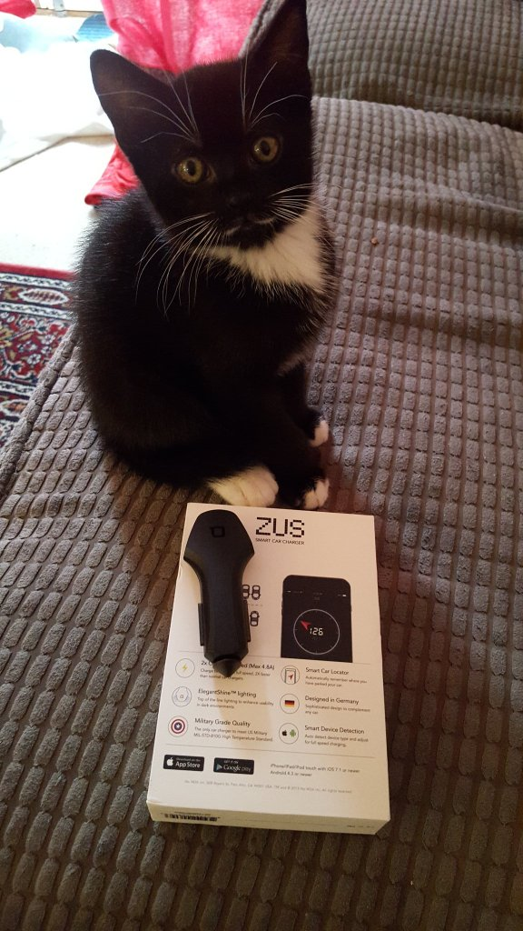 Vader the kitten loving the Zus Smart Car Charger!