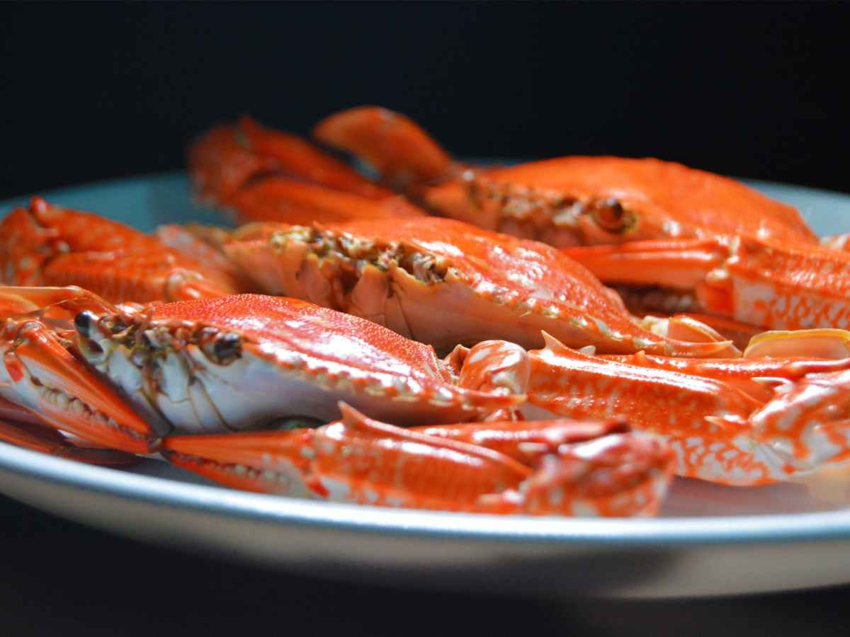 photo of a crab on a white ceramic plate