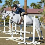 What S The Difference Between A Hunter And A Jumper Swan Training