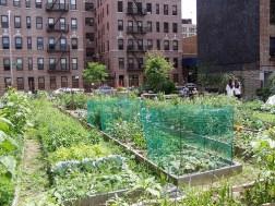 urban-community-garden