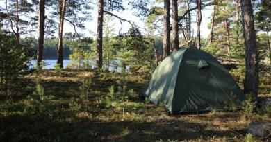 Zanocuj w lesie: coś dla miłośników przyrody, leśnej przygody i surviwalu