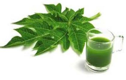 papaya leaves for health